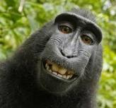 selfie de mono